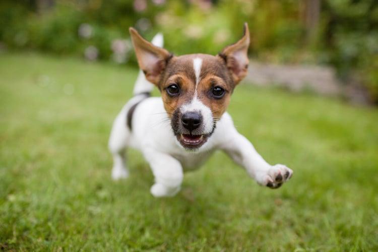 WordPress - free like a puppy